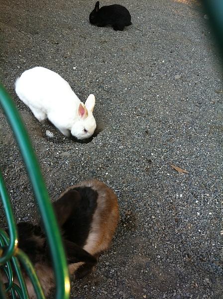 這裡的兔子好愛挖洞