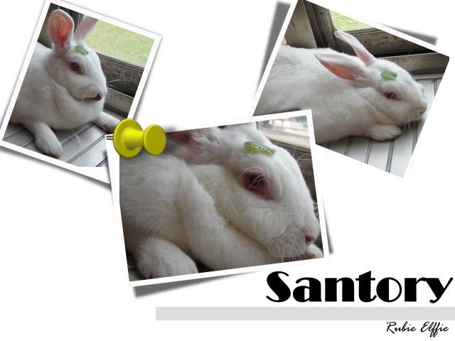 santory.jpg