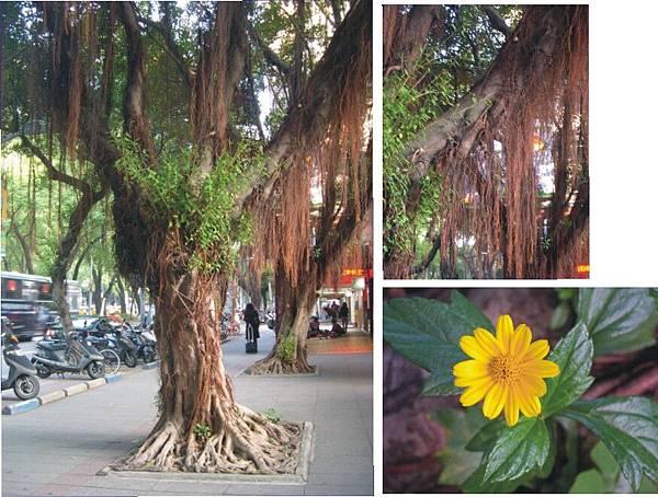 榕樹的鬍鬚和根上的小黃花.jpg