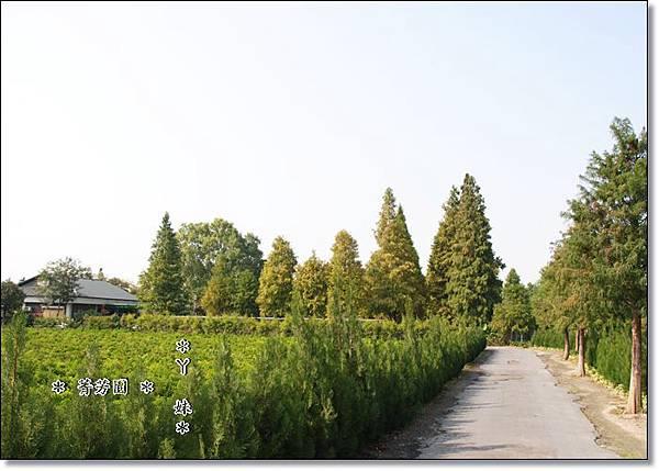 菁芳1.jpg