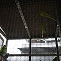 散步第二站...賞鳥