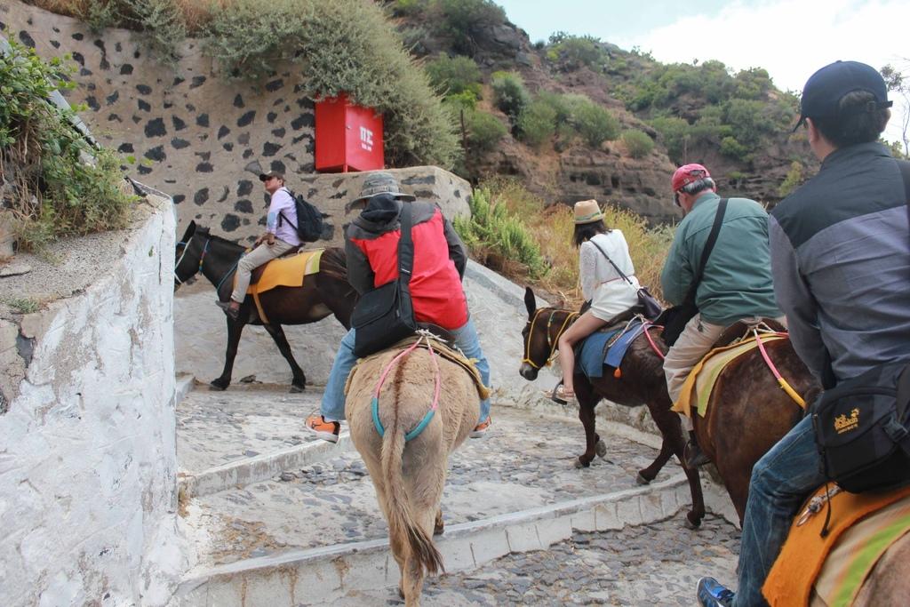 費拉Fira騎驢子 (28).jpg