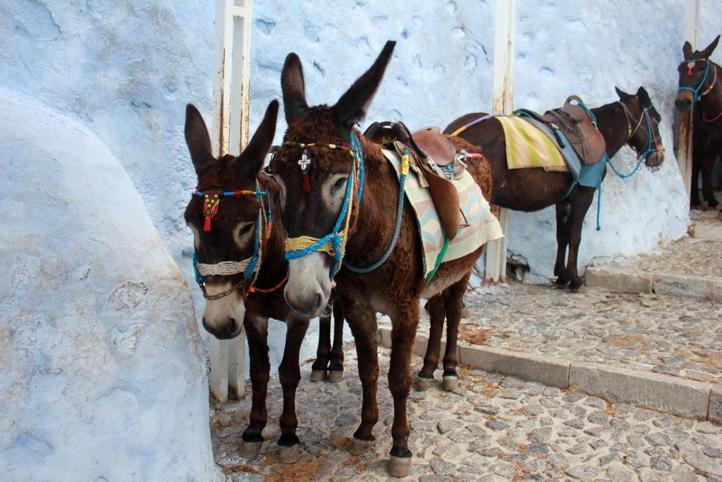 費拉Fira騎驢子 (47).jpg