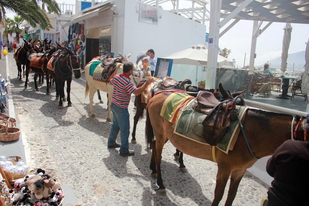 費拉Fira騎驢子 (53).jpg