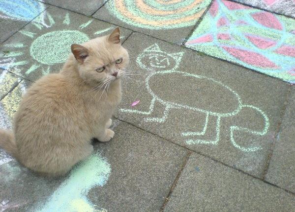 裝無辜的貓.jpg
