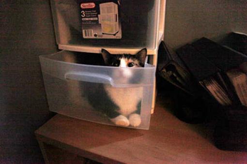 原來這就是躲貓貓的由來-8.jpg