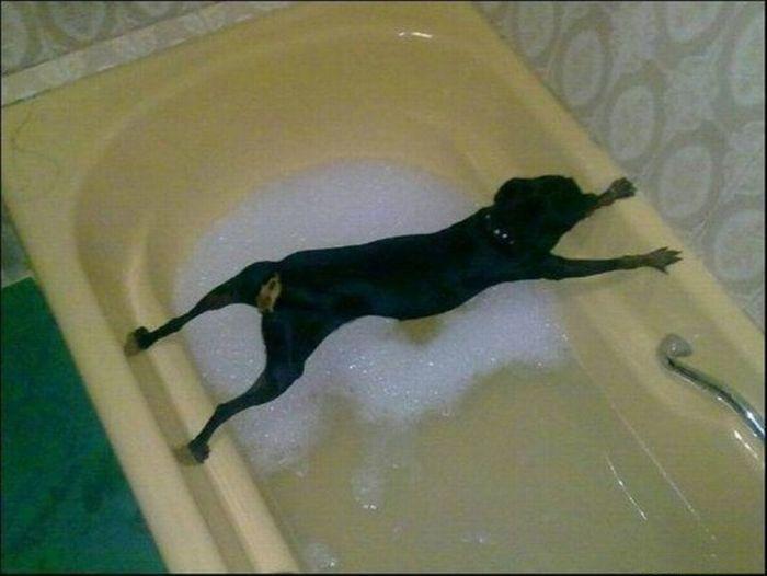 怕洗澡的狗.jpg
