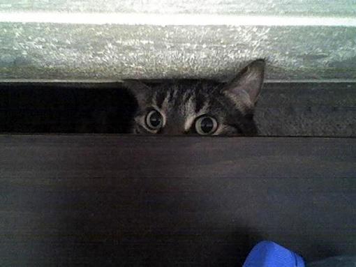 原來這就是躲貓貓的由來-9.jpg
