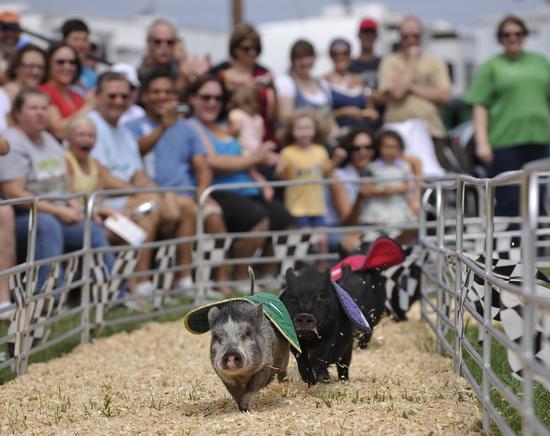 超可愛的小豬-1.jpeg
