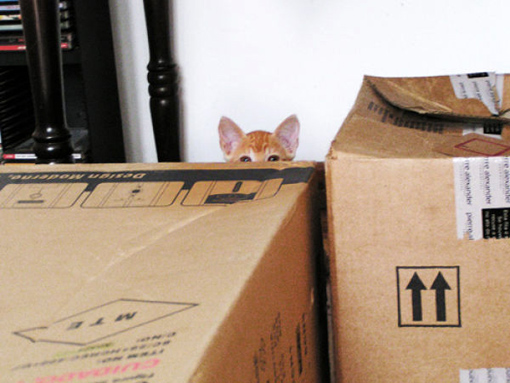 原來這就是躲貓貓的由來-13.jpg
