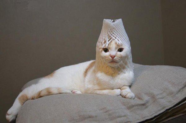 埃及豔貓心想~大家在笑什麼!.jpg