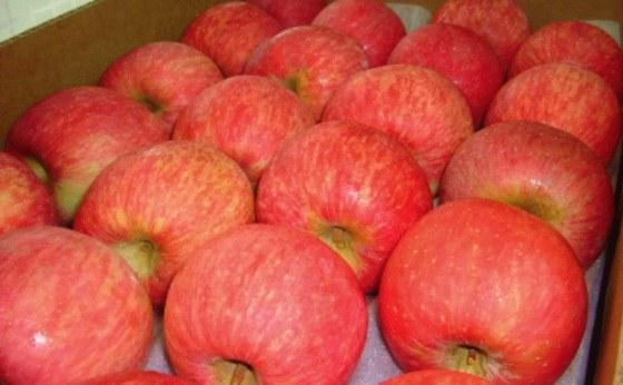 智利套袋富士蘋果-2.jpg