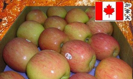 加拿大富士蘋果.jpg