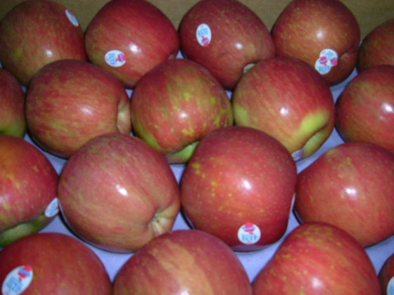 華盛頓富士蘋果-1.jpg