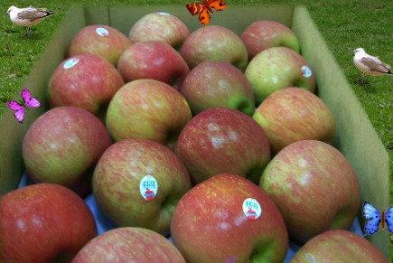 華盛頓富士蘋果-3.jpg