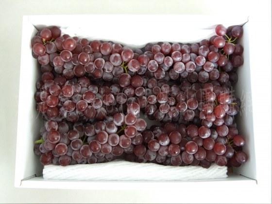 日本山梨縣溫室珍珠葡萄-3.jpg