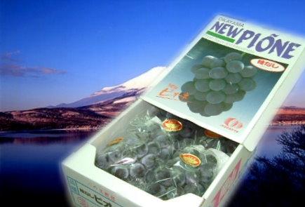 空運日本岡山巨峰葡萄-2.jpg