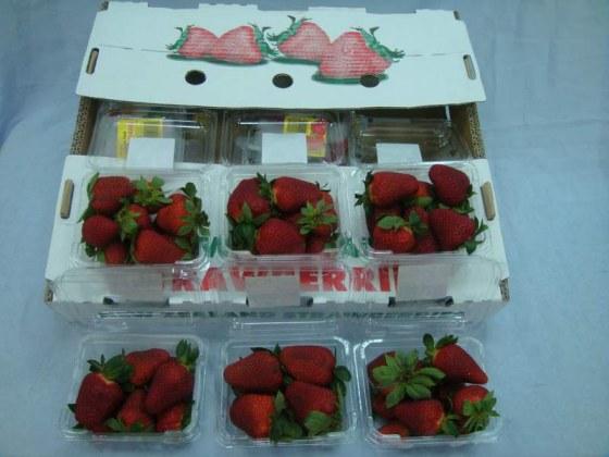 空運紐西蘭草莓.jpg