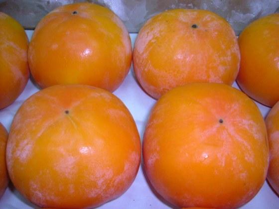 空運日本富有甜柿.jpg