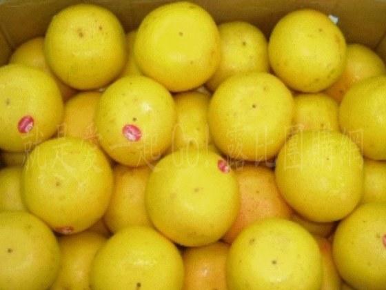 佛羅里達州葡萄柚.jpg