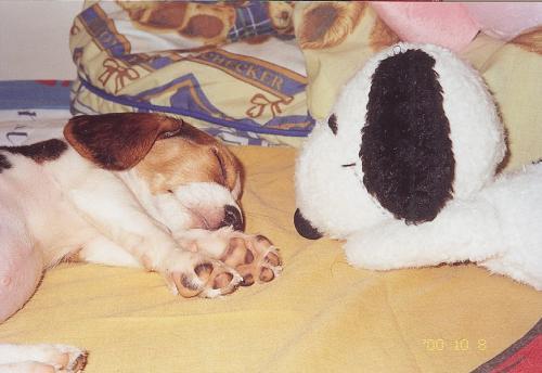 熟睡的狗--超可愛-1.jpg