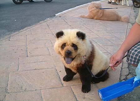 長的像狗的熊.jpg