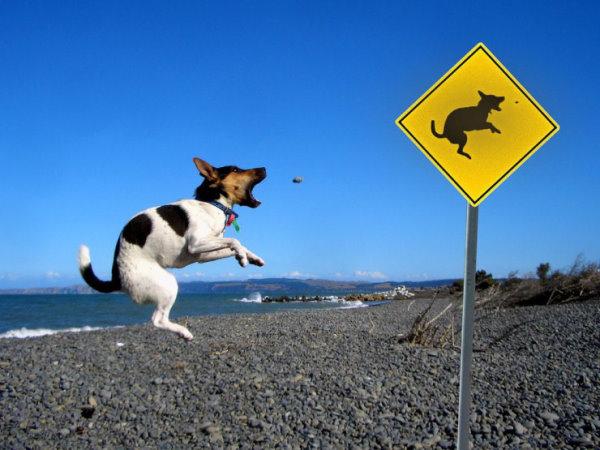 狗狗是有練過滴.jpg