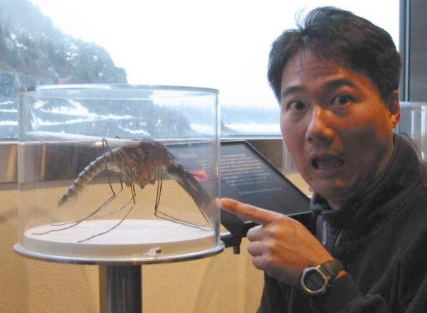 史上最大的蚊子.jpg