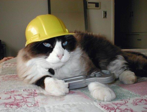 我身為一個汽車維修員.jpg