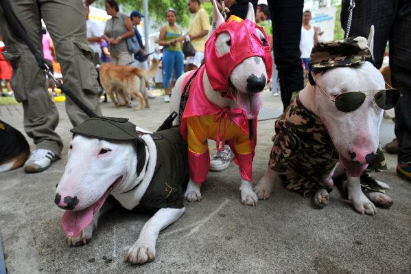 2009 哥倫比亞寵物節-1.jpg
