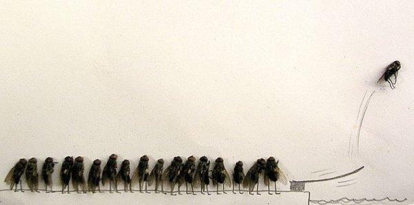 蒼蠅標本藝術畫作-1.jpg