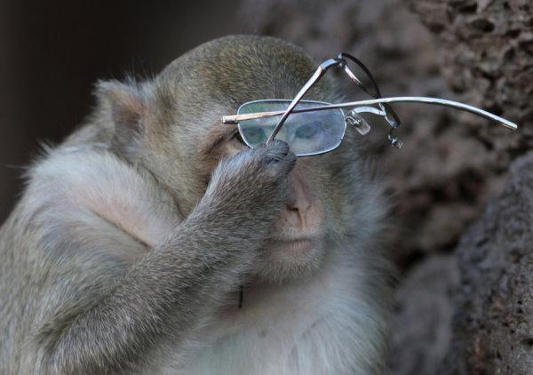 2009 泰國猴節-1.jpg