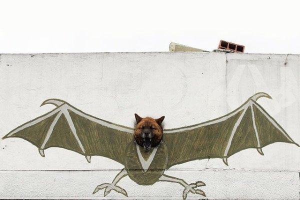 強者我的狗.jpg