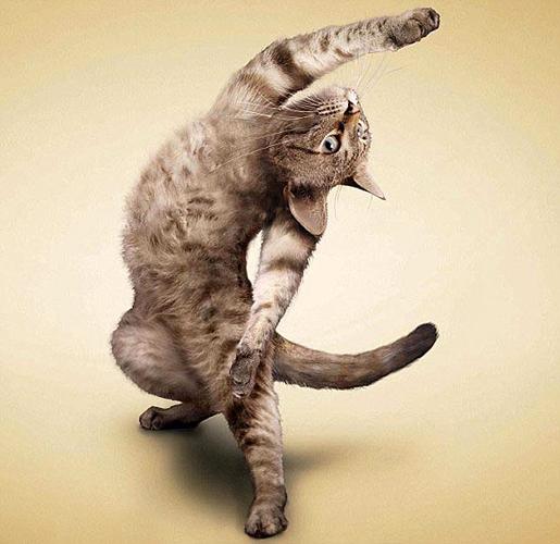 瑜珈貓-1.jpg