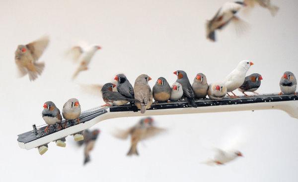 小鳥彈吉他-1.jpg