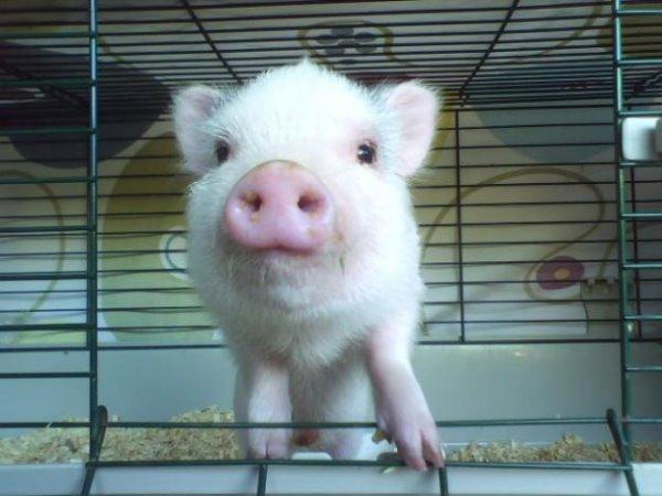 到處都是可愛的豬豬-1.jpg