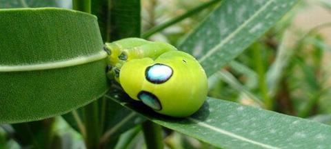 罕見的爬行類蟲子-1.jpg