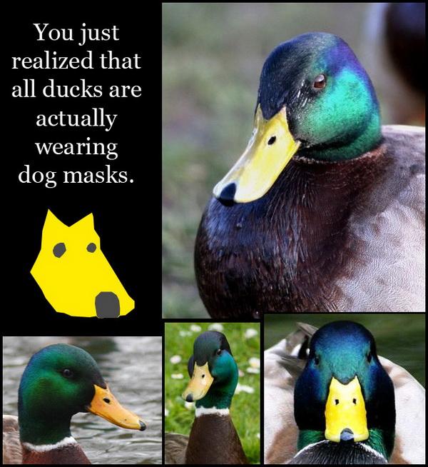 鴨子的狗面具.jpg
