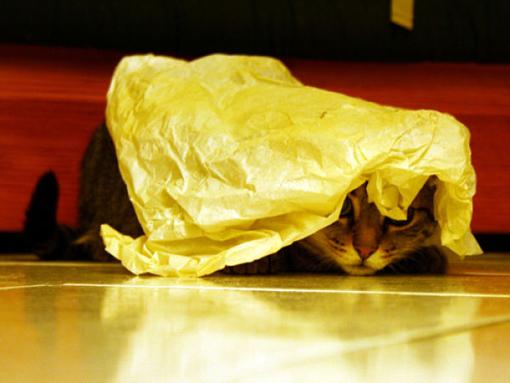 原來這就是躲貓貓的由來-11.jpg