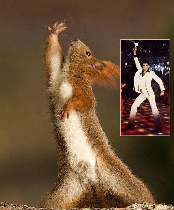 拍到一隻松鼠跳迪斯可舞給小正妹看-1.jpg