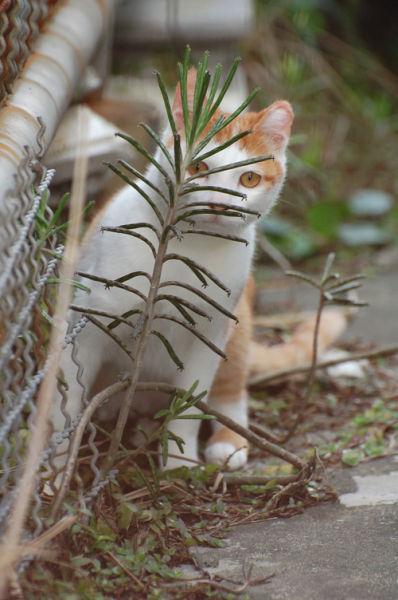 原來這就是躲貓貓的由來-4.jpg