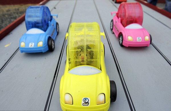 2010 倉鼠賽車比賽-1.jpg