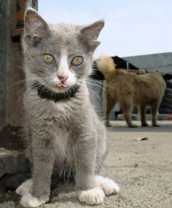 有隻小貓長了4隻耳朵-1.jpg