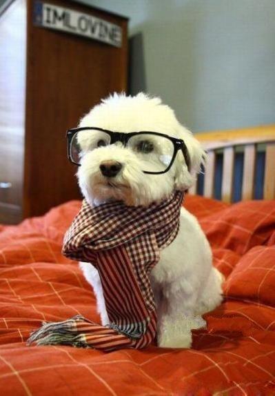 有學問的狗.jpg