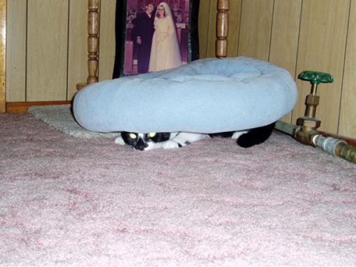 原來這就是躲貓貓的由來-6.jpg
