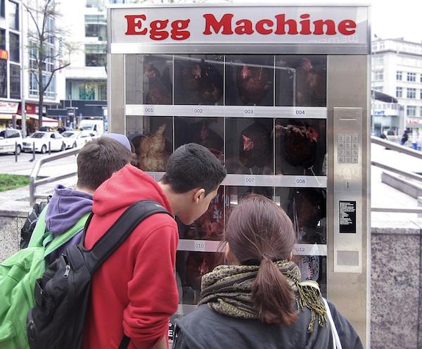 真的自動販賣雞.jpg