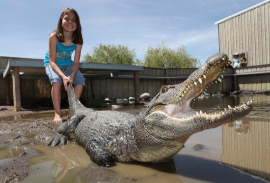 摸到鱷魚的尾巴,小正妹忍不住笑了-1.jpg