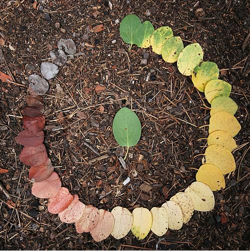 用葉子來詮釋生命的循環.jpg