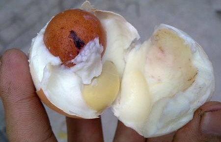 傳說中的蛋中蛋-2.jpg