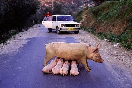 少婦當眾餵奶 導致交通阻塞.jpg
